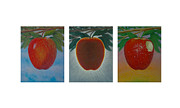 Fruit Tree Art Giclee Framed Prints - Apples Triptych Framed Print by Don Young