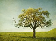 Old Tree Prints - Appletree Print by Priska Wettstein