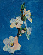 Flor Paintings - Apricot Blossom by Michael Creese