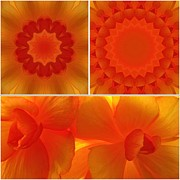 Kaleidoscope Art - Apricot by Tom Druin
