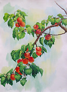 Apricot Originals - Apricot Tree Branch by Elena Roche