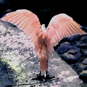 Jacksonville Digital Art Prints - Apricot Wings Print by Patricia Januszkiewicz