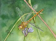 Dragonflies Originals - April Dragonfly by Lynne Hurd Bryant