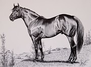 Bay Horse Drawings - AQHA Stallion Driftwood by Cheryl Poland