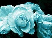 Rain Drop Posters - Aquamarine Roses with Raindrops Poster by Jennie Marie Schell