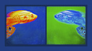 Tropical Fish Mixed Media Posters - Aquarium Art Diptych Poster by Steve Ohlsen