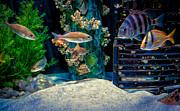 Kathleen K Parker - Aquarium Art