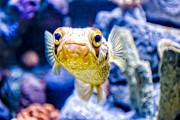 Kathleen K Parker - Aquarium of the Americas Exhibit2
