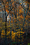 Arkansas Digital Art Metal Prints - AR Fall 12-005FP Metal Print by Scott McAllister