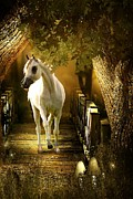 Horse Digital Art - Arabian Dream by Davandra Cribbie
