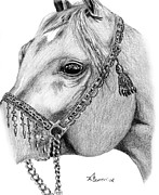 Mane Drawings - Arabian Halter by Kayleigh Semeniuk