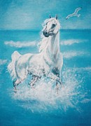 Postcard Pastels - Arabian horse and seagull by Dorota Zdunska