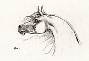 Horse Drawings - Arabian Horse Drawing 01 08 2013 by Angel  Tarantella