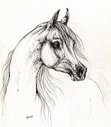 White Horses Drawings Prints - Arabian horse drawing 10 09 2013 Print by Angel  Tarantella