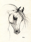 Horse Drawing Prints - arabian horse drawing 15 10 2013 A Print by Angel  Tarantella