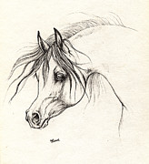 Horse Drawing Prints - Arabian Horse Drawing 18 10 2013 Print by Angel  Tarantella