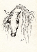 Horse Drawing Posters - Arabian horse drawing 19 10 2013 Poster by Angel  Tarantella
