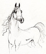 Arabian Horses Drawings - Arabian Horse Drawing 19 by Angel  Tarantella