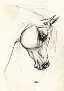 Horse Drawing Prints - Arabian Horse Drawing 20 10 2013 Print by Angel  Tarantella