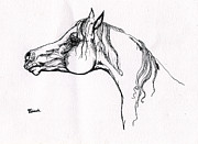 Horse Drawing Posters - Arabian Horse Drawing 20 Poster by Angel  Tarantella