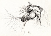 Arabians Posters - Arabian horse drawing 2013 09 13 Poster by Angel  Tarantella