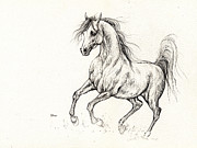 Horse Drawings - Arabian horse drawing 2013 09 13b by Angel  Tarantella