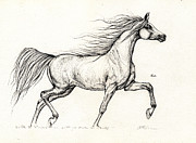 Horse Drawings - Arabian horse drawing 2013 09 13c by Angel  Tarantella
