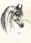 Horse Drawings - Arabian Horse Drawing 28 08 2013 by Angel  Tarantella