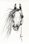 Horse Drawing Prints - Arabian Horse Drawing 29 08 2013 Print by Angel  Tarantella