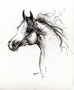 Horse Drawings - Arabian Horse Drawing 3 by Angel  Tarantella
