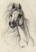 Wild Horse Drawings Posters - Arabian Horse Drawing 37 Poster by Angel  Tarantella
