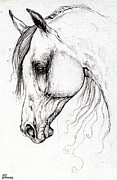 Horse Drawing Posters - Arabian Horse Drawing 45 Poster by Angel  Tarantella