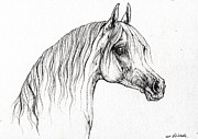 Horse Drawings - Arabian Horse Drawing 47 by Angel  Tarantella