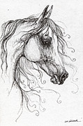 Horse Drawings - Arabian Horse Drawing 48 by Angel  Tarantella