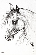 Horse Drawings - Arabian Horse Drawing 49 by Angel  Tarantella