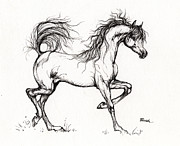 Horse Drawing Posters - Arabian Horse Drawing 5 Poster by Angel  Tarantella