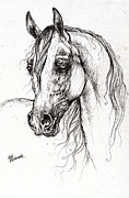 Horses Drawings - Arabian Horse Drawing 50 by Angel  Tarantella