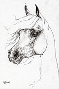 Horse Drawings - Arabian Horse Drawing 52 by Angel  Tarantella