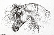 Horse Drawings - Arabian Horse Drawing 53 by Angel  Tarantella
