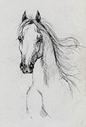 Horse Drawings - Arabian Horse Drawing 58 by Angel  Tarantella