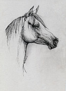 Horse Drawings - Arabian Horse Drawing 64 by Angel  Tarantella