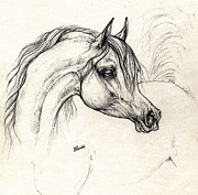 Horse Drawing Prints - Arabian Horse Drawing A 18 10 2013 Print by Angel  Tarantella