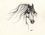 Horse Drawing Prints - Arabian Horse Drawing B 18 10 2013 Print by Angel  Tarantella