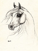 Horse Drawing Prints - Arabian Horse Drawing D 18 10 2013 Print by Angel  Tarantella