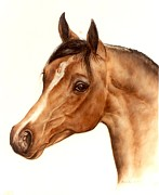 Animals Glass Art Metal Prints - Arabian Horse Head Study Metal Print by Julia Sweda-Artworks by Julia