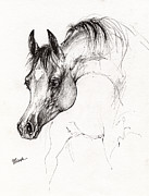 Horse Drawings - Arabian Horse Ink Drawing 5 by Angel  Tarantella
