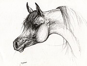 Horse Drawings - Arabian Horse Ink Drawing 6 by Angel  Tarantella