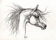 Horse Drawings - Arabian Horsedrawing 28 08 2013 by Angel  Tarantella