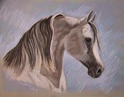 Horse Art Pastels Pastels Prints - Arabian In Pastel Print by Cynthia Riley
