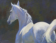 White Horse Painting Originals - Arabian Light by Alecia Underhill